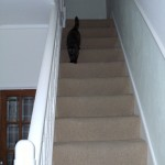 stairs with carpet and cat (Gretel)